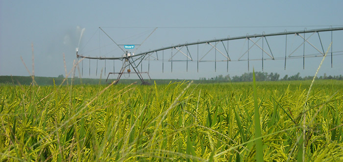rice-production_dscn1443-updated-sign_700x332